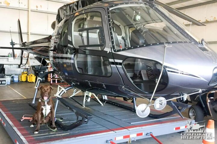 Dog next to a helicopter