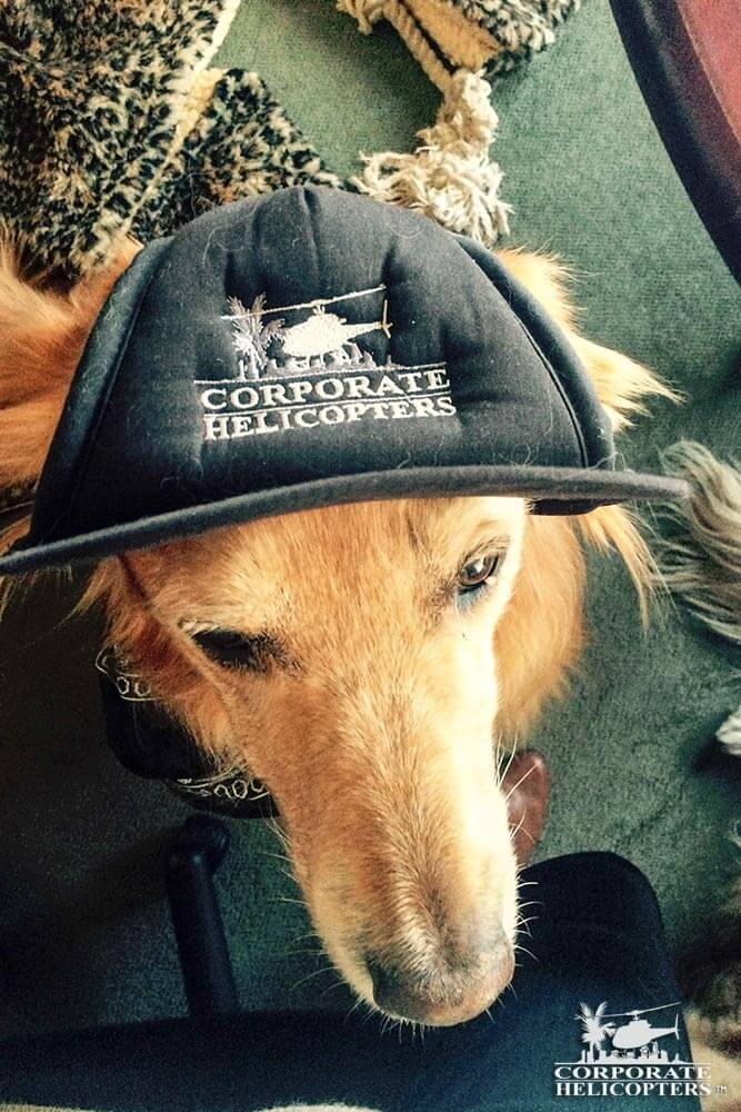 Maverick, Helicopter dog: The dogs of Corporate Helicopters