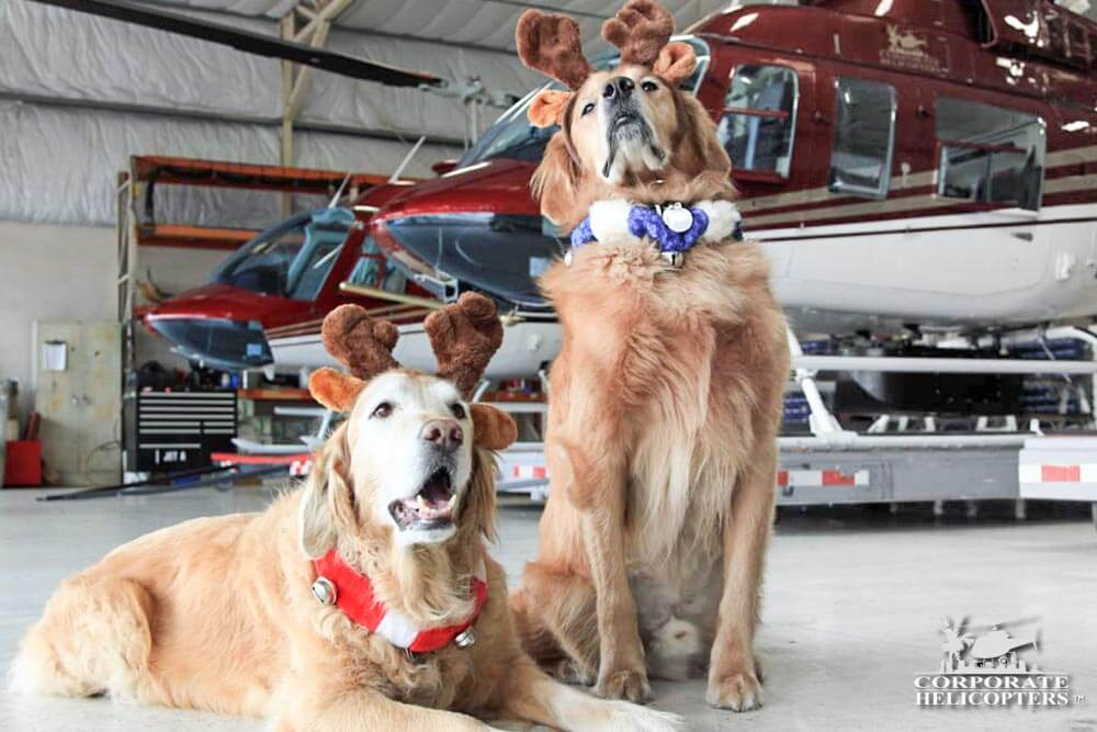 Maverick & Sophie, Helicopter dogs. The dogs of Corporate Helicopters